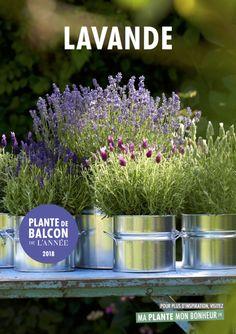 La lavande, la plante de balcon de l'année 2018, Office hollandais des fleurs (OHF) La #lavande élue plante de #balcon de l'année 2018 @plantebonheur http://www.pariscotejardin.fr/2018/04/la-lavande-elue-plante-de-balcon-de-l-annee-2018/