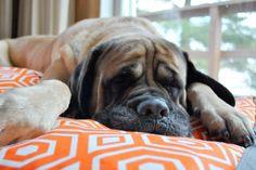 Nap Time.  No Interruptions!  Let me totally enjoy ez living home memory foam topper pillow bed. www.ezlivinghome.com