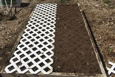Use lattice to mark spacing for plants!  -nice site for gardening tips...  Love this idea!