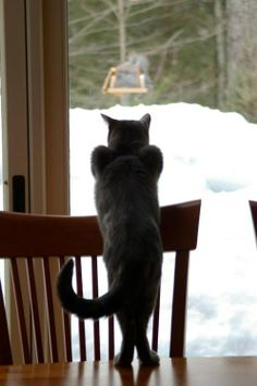 How to watch squirrels and look sexy at the same time.  #cat #humor #cats #funny #quotes #meme #lolcats #cute =^..^= www.zazzle.com/...