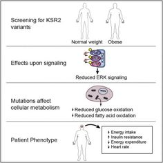 Complete study - KSR2 Mutations Are Associated with Obesity, Insulin Resistance, and Impaired Cellular Fuel Oxidation