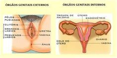 Biologia Enem: Revise o sistema genital feminino! – Sistema Reprodutor (aula 3) - http://fuvestibular.com.br/biologia-enem-revise-o-sistema-genital-feminino-sistema-reprodutor-aula-3/