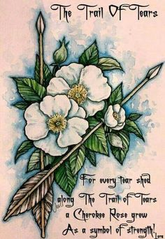 For every tear shed along The Trail of Tears a Cherokee Rose grew as a symbol of strength! Cherokee Rose, Native American Cherokee, Native American Tattoos, Native Tattoos, Native American Quotes, Native American Symbols, American Indians, Cherokee Symbols, Cherokee History