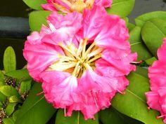 Flores, fotografia tomada en holanda, europa