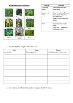 Classifying Plants Worksheet - I have included larger copies of the plant pictures if you want them to cut and stick on to their id key. This crossword activity can be used to revie. Classifying Plants, Plant Lessons, Plant Classification, Cloze Activity, Bookmarking Sites, Have Fun Teaching, Reading Comprehension Worksheets, Plant Science, Science Worksheets