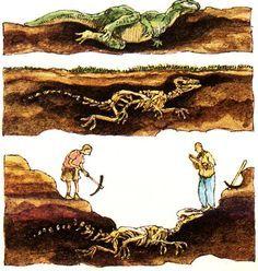 ontstaan van fossielen - Google zoeken