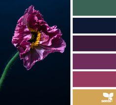 { color flora } | image via: @cloverhome.nl