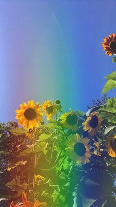 Flowers: rainbow sunflower wallpaper rainbow sunflower inc. Aesthetic Backgrounds, Aesthetic Iphone Wallpaper, Aesthetic Wallpapers, Aesthetic Images, Sunflower Pictures, Sunflower Art, Sunflower Garden, Sunflower Quotes, Rainbow Aesthetic