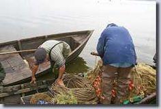 Lac de Grand Lieu - La pêche. La réglementation de la pêche sur le lac est draconienne. Pour être autorisé à exploiter ses eaux, il faut être fils ou petit-fils de pêcheur et résider à Passay ; actuellement on dénombre 11 pêcheurs, tous sont membres de la Société coopérative des pêcheurs du lac de Grand-Lieu qui fixe des règles précises et particulières à l'exercice de la pêche dans cet environnement.