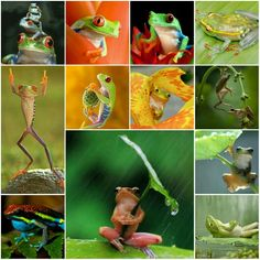 Colourful Frogs