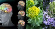 Čučoriedky Čučoriedky majú silné antioxidantné účinky ktoré znižujú oxidačný stres, teda to čo stojí za depresiou. Taktiež podporujú tvorbu nových buniek, to je ďalší spôsob ako liečiť depresiu. Banány Toto ovocie je bohaté na tryptofán ktorý sa mení na 5-HTP mozgom. Následne sa 5-HTP zmení
