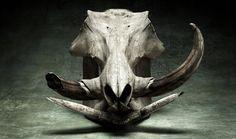 Taxidermy, Osteology Art on Pinterest | Taxidermy, Bird ...