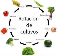 rotacion-cultivos2015-11-13