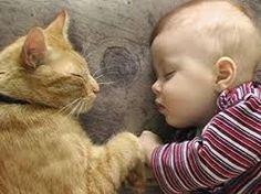 bebe e gato dormindo