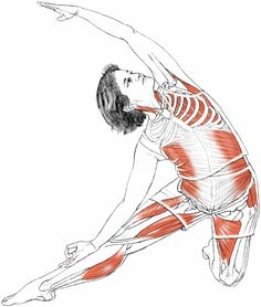 Parighasana (gate-latch pose) via Leslie Kaminoff