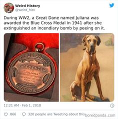 'Weird History' Is An Account That Shares Interesting, Odd, And Funny Things That Happened Throughout History Weird History Facts, Strange History, Asian History, British History, Great Dane Names, Live In The Present, History Class, Tudor History