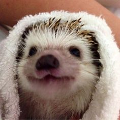 Look how cute this hedgie is!!