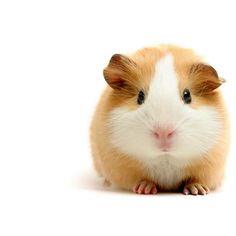 Яндекс.Картинки: поиск изображений в интернете ❤ liked on Polyvore featuring animals, pet and filler