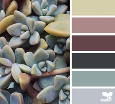 succulent hues by Design Seeds Colour Pallette, Colour Schemes, Color Trends, Color Patterns, Color Combos, Cactus E Suculentas, Color Harmony, Design Seeds, Colour Board
