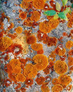 close-up, lichen, jasper, national park, pyramid lake, alberta, photo
