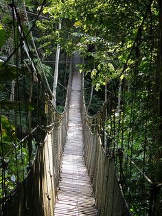Canopy walk, Amazon rainforest, Peru