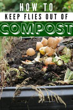 How to Troubleshoot Flies in Compost - Naples Compost How To Start Composting, Composting Methods, Composting At Home, How To Compost, Compost Soil, Garden Compost, Leaf Compost, Vegetable Garden, Fruit Flies Vinegar