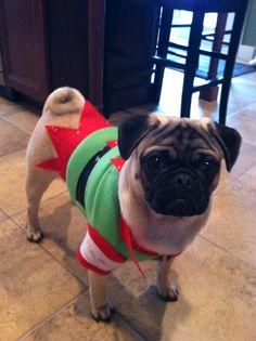 Franks chrismas costume.. our little christmas elf :) <3