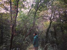 Ormanların kralı belgesel adam.. #belgesel #hayatakarken #photographyislife #naturelovers #huzurrrr #doğayısevyeşilikoru #greenday #forestroad #oksijen #naturephotography #hayatgezincegüzel