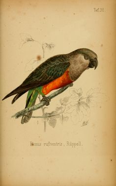 Systematische Uebersicht der Vögel Nord-Ost-Afrika's : - Biodiversity Heritage Library