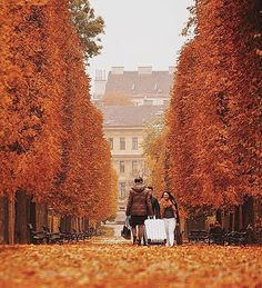 The beauty of the autumn in Vienna. Go somewhere and enjoy the weekend B) staff is working happy and ready to surprise you  photo by @barisozturkofcl @repostapp #repost #autumn #weekend #saturday #vienna #photooftheday #bestoftheday #picoftheday #red #leaves #beautiful #beauty #nature #mothernature #urban #city #street #park #austria #travelphotography #motivational #saturday #architecture #art #instagood #instadaily #instamood #instagram #moment #focus