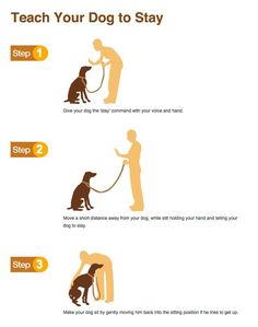 Dog Obedience Training – Dog Training Tips Online – And Free! Puppy Training Tips, Training Your Dog, Potty Training, Service Dog Training, Crate Training, Training Collar, Obedience Training For Dogs, Clicker Training Puppy, Husky Training