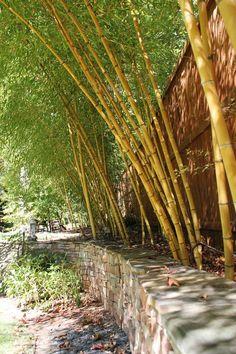 Robert Young - Large bamboo screen