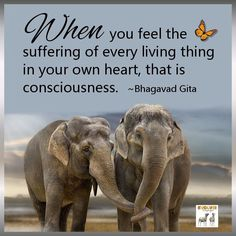 That is consciousness, that is true compassion.