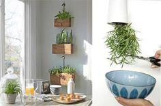 bylinkový koutek v kuchyni