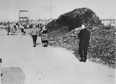 Holocaust: Photograph of Survivors in Bergen-Belsen Walking Near a Large Pile of Shoes
