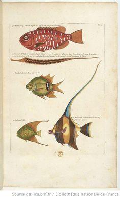 Poissons, écrevisses et crabes de diverses couleurs et figures