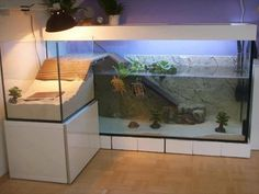An aquarium is a pleasant manner of displaying that you simply love nature and that you've a need to deal with it. A house aquarium is one of the best. Turtle Aquarium, Turtle Pond, Pet Turtle, Aquarium Fish, Aquarium Ideas, Turtle Care, Saltwater Aquarium, Saltwater Tank, Tortoise Aquarium