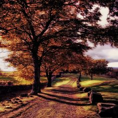 an autumn walk(revisited) by KENNY BARKER, via 500px