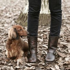 """Frye Jayden Cross Engineer boots black Brand new Frye Jayden Cross Engineer black ankle boots. Wear these all year with pants or a dress! Tumbled full grain leather with buckled details, these beautifully crafted, insanely comfortable boots are always ready for the unexpected. 8 1/4"""" shaft height. 12 3/4"""" shaft circumference. 1/2"""" heel height. Comes with bag and box. Will sell for 160 on merc 😊 Frye Shoes"""