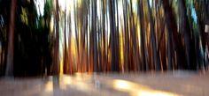 "DAY 166:  ""FLAMING TREES""  -  2015  Isla Victoria, Argentina"