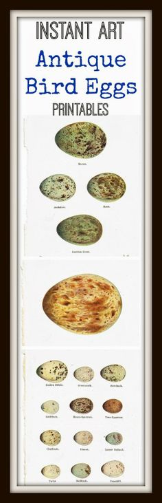 FREE PRINTABLES - 1920's Bird Eggs Framable Art Pages  ~~~from KnickofTimeInteriors.blogspot.com