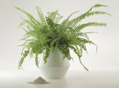 Eine Urne für neues Leben: Panta Rhei Plants, Pictures, Urn, Ash, New Life, Stones, Ideas, Plant, Planting