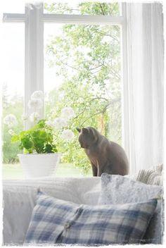 Julias Vita Dreams - gorgeous cat statue/figurine