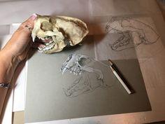 Sea otter skull in progress