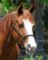 Image result for horse head profile