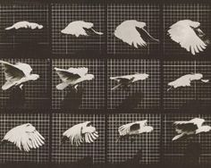 Muybridge Stop-Motion Sequences, Animated