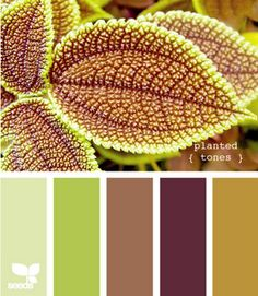 What a lovely website... LOTS of fun color inspirations! Lovely.