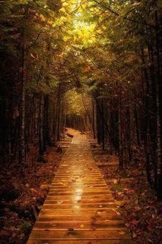 Michigan's Tunnel of Trees