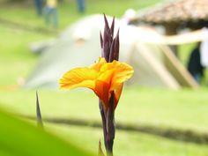 Flor natural en el Parque del Río Neusa, Cundinamarca.