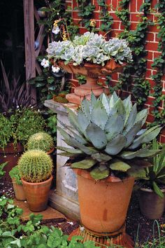Container Gardening Ideas 10 Outstanding Succulents - FineGardening - Skip the finicky selections and go for these unique yet reliable beauties Growing Succulents, Cacti And Succulents, Planting Succulents, Garden Plants, Potted Plants, Succulent Landscaping, Air Plants, Container Gardening Vegetables, Succulents In Containers